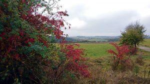 foto herfstkleuren in Ahrdorf