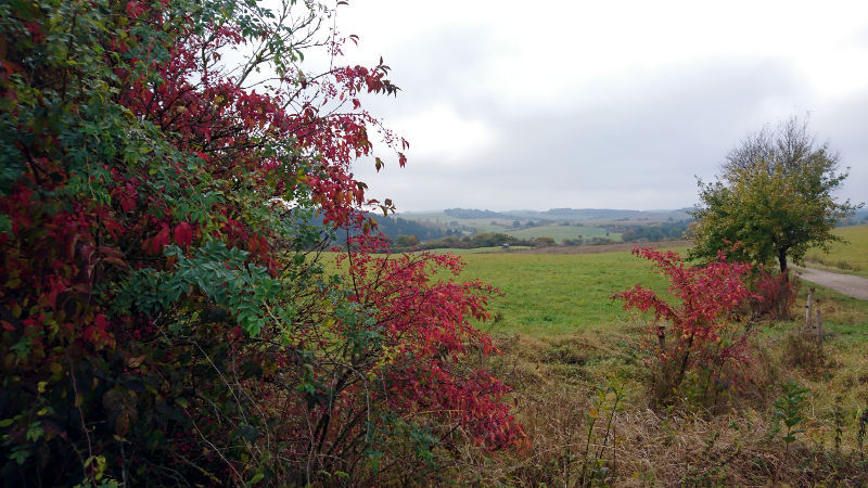 Herfstkleuren in Ahrdorf